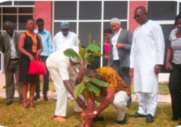 gcci trees planted 1