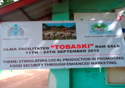 gmla sale tobaski rams